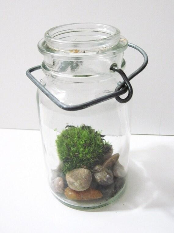 Vintage Jar Terrarium