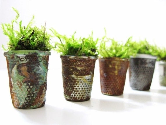 Set of 4 Vintage Thimble Planters with Live Moss