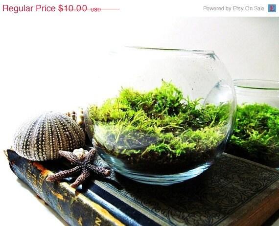 SALE THRU MONDAY Terrarium: Miniature Bowl Garden