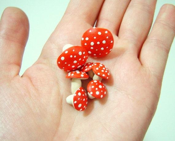7 Toadstool Mushrooms For Your Terrarium