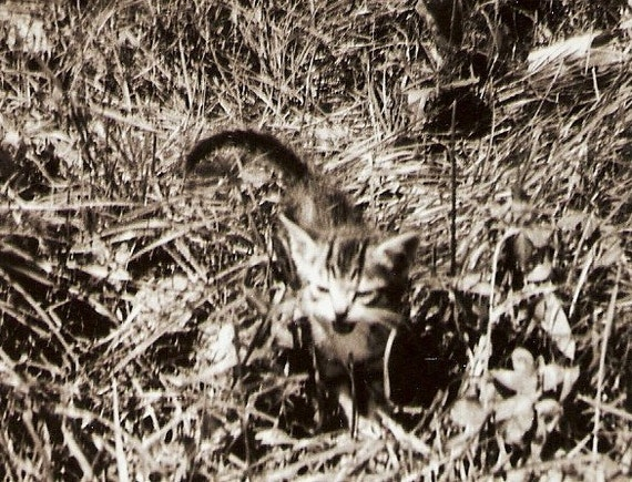 Tabby Cat Kitten Meows In The Tall Grass Vintage Photo