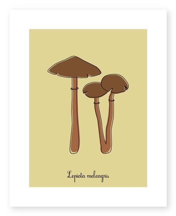 Mushroom Print - Lepiota meleagris