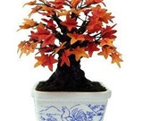Miniature Flowers Bonsai Lucky Tree Polymer Clay Maple