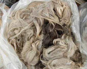 BAYAGAARD 1lb raw wool Navajo Churro