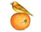 Orange Bird  - Art Print from original painting