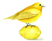 Yellow bird on lemon Art print from original painting