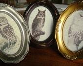 the trio of owls - original prints - set of three - vintage illustrations