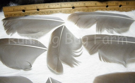 Feathers Cruelty Free Organic Buff Goose Wing Feathers Trimmed Light Grey Apricot-Fawn