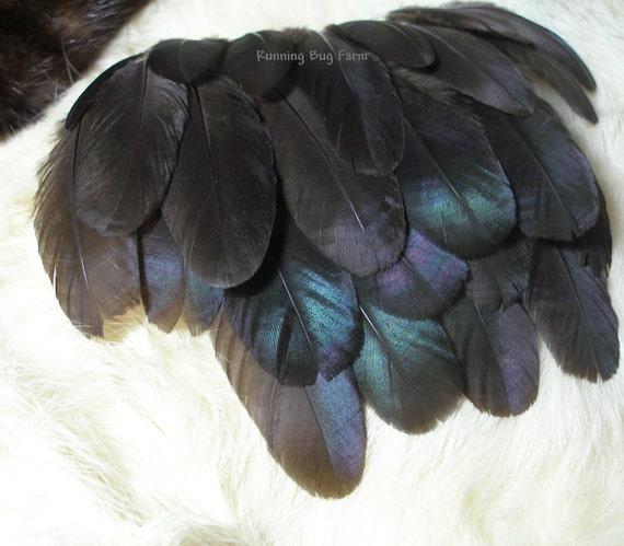 Organic Loose Feathers Black Australorp Hen Natural Feather Supplies Free Range Pastured Birds 40