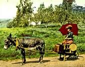 Vintage Donkey Cart Girl - Print
