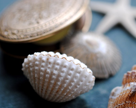 GreenWitch Solid Natural Perfume Mini Compact - A seaside fragrance woven with essential oils, infusions and the wild magic - Nautical notes