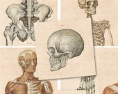 2.5 Inch Squares - Vintage Medical Illustrations - Digital Collage Sheet 816 - Direct Download