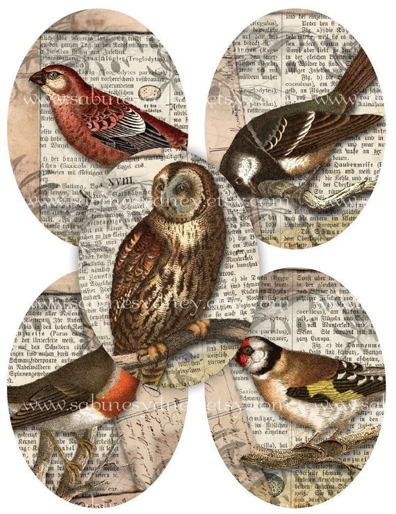 30 mm x 40 mm Ovals - 1.15 Inch x 1.57 Inch - Bird Owl Collages - Digital Collage Sheet 756