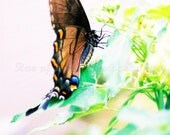 Wings of Spring - 4x6 Etsy Original  Art Photography Print