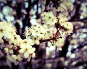 Spring Fever - 8x12 Etsy Original Photography Art Print