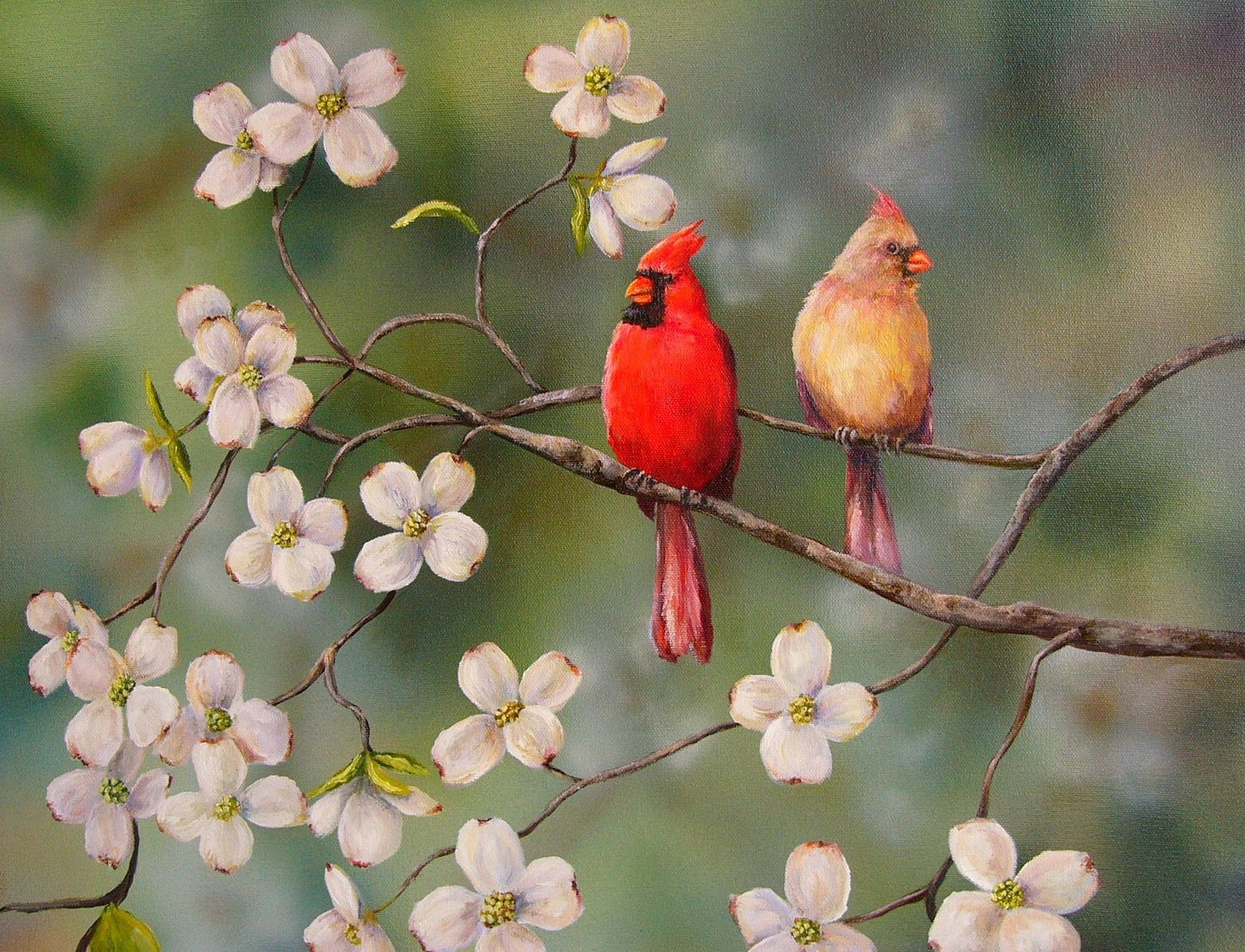 PRINT Cardinal Red Bird Dogwood Flowers Davis