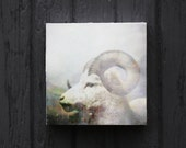 RESERVED for Glowing Heart, Winter Photography, Goat, Art Limited Edition Encaustic Photograph Mounted to Wood Panel, 6""