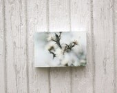 Winter White Photography, Art, Limited Edition Encaustic Photograph Mounted on Wood Panel, 4x6
