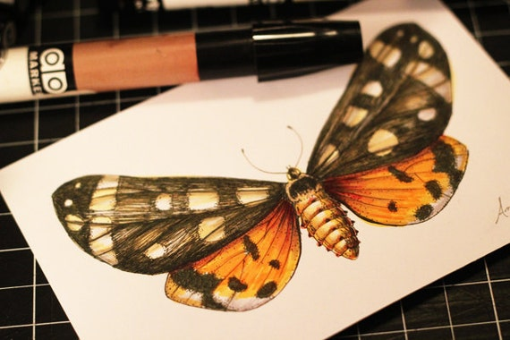Butterfly Print - Color Added