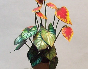 miniature caladium and croton