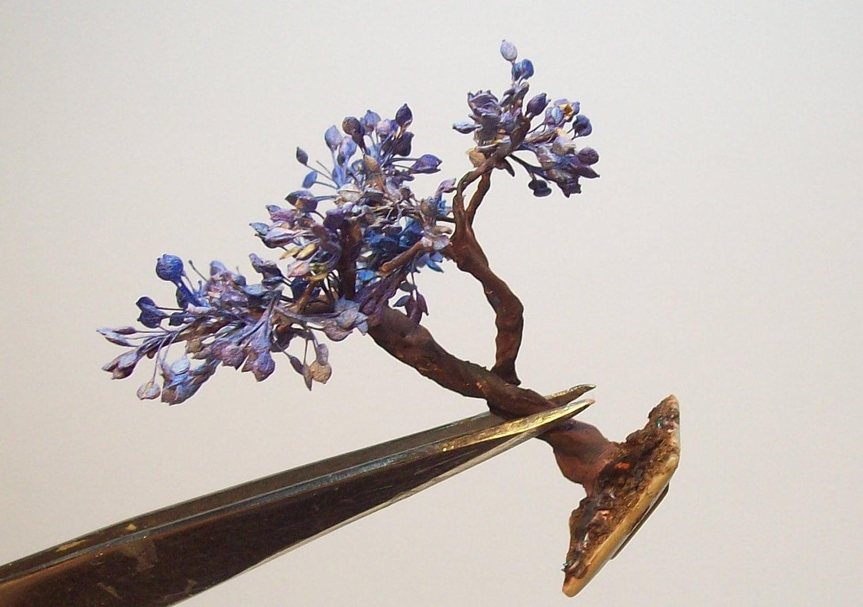 jacaranda bonsai 3. Black Bedroom Furniture Sets. Home Design Ideas