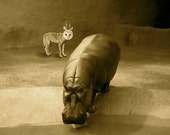 Animal Art , Hipo Has An Unexpected Visitor , Fine art inkjet print ,8x8