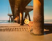 Canvas Print,Animal Art, Under The Venice Pier , Gallery Wrapped,11'x14'