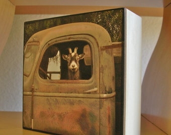 "Truck Driver Goat, Photo on 4x4 wood block, this photo is in ""Southern Living"" magazine,July,2011"