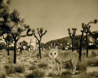 Joshua Tree - Odd Owl Creature - As seen in Joshua Tree, Calif - Signed 8'x8' archival print, Sepia tone