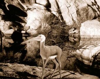 Joshua Tree - Animal Art Print - 6x6 Wood Block - Quirky PelicanDeer Hybrid Creature in Joshua Tree,CA