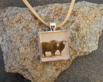 Sheep Photo Necklace, Vintage Photo Pendant,Silver and Natural suede,