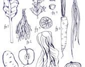 Botanical Illustration Art Print Vegetables Herbs and Legumes - Delicious Veggies