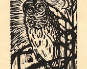 Owl Listening to the Moon