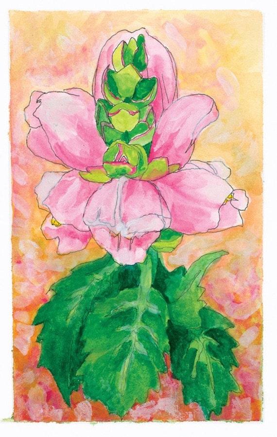 Turtlehead Fine Art Print from The Exuberant Garden hardcover book