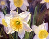white daffodils watercolor print of original painting by Cathy Hillegas - CathyHillegas