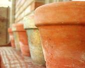 Garden Photograph, Garden Plant Pots, End of Summer, Pots on Shelf
