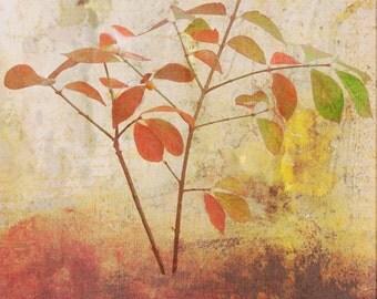 Autumn Leaves Collage, Fall Color Print, Nature Photo Collage, Autumn Scene, Rustic Cabin Decor, Digital Mixed Media, Rustic Wall Decor