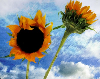 Sunflowers Photograph, Orange Sunflowers Art, Garden Photograph, Nature Wall Art, Garden Floral Art, Summer Sunflowers, Cottage Wall Decor