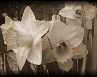 Photo Notecards, Set of Six, Sepia tone, Garden Flowers, Tree Blossoms