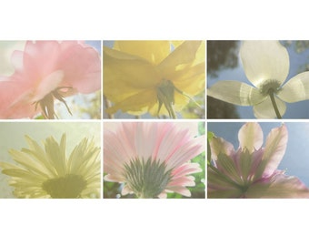 Floral Photo Notecards, Six Cards, Reaching for the Sun, Roses, Daisies, Clematis, Dogwood