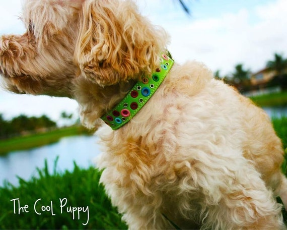 Loki Puppy Leather Collar - Key Lime Green
