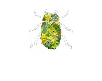 Beetle, flowers. 8x10 print
