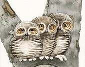 Three Small Owls - 8x10 archival watercolor print by Tracy Lizotte