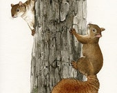 Squirrel Tag - 8x10 archival watercolor print by Tracy Lizotte