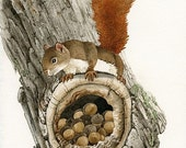 The Nut Collector - 8x10 ORIGINAL watercolor painting by Tracy Lizotte