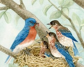 Bird Tree with Bluebirds - 11x14 archival watercolor print by Tracy Lizotte