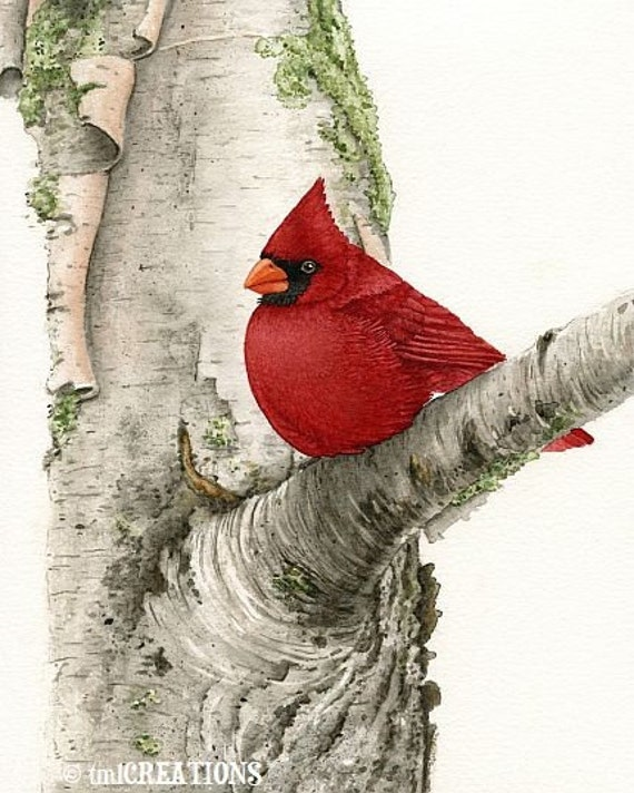 Cardinal In Birch Tree - 8x10 archival watercolor print by Tracy Lizotte
