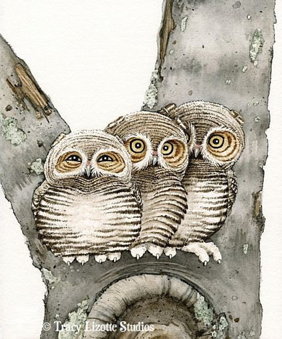 Three Small Owls- 5x7 archival watercolor print by Tracy Lizotte
