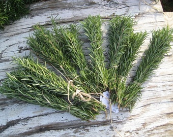 """ROSEMARY Grill Skewers / Ten Fresh Organic sprigs / Fragrant  / premium length 10""""/  great for summer grill / kabobs / excellent with lamb"""