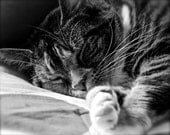 Sleeping Tabby Cat 5X7 Print
